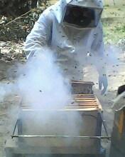 O Sr. Manoel com roupa especial iniciando a divisão das Melgueiras, e o Sr Neri preparando o terreno do apiário.