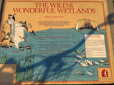 The Wild & Wonderful Wetlands