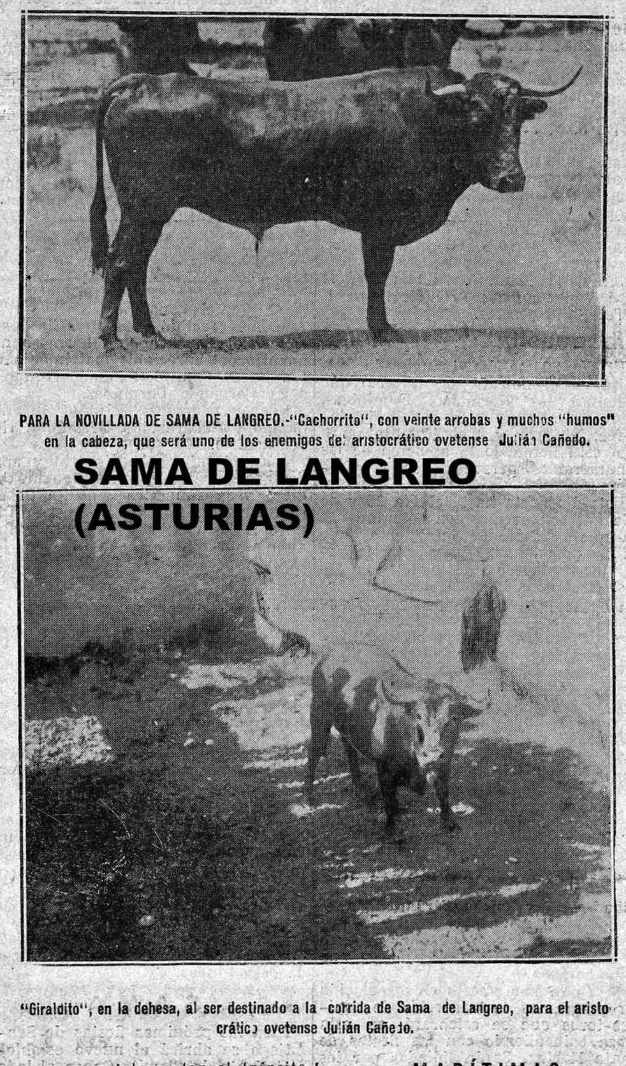 SAMA DE LANGREO ASTURIAS TOROS