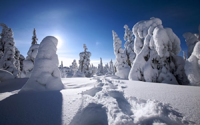Riisitunturi National Park in southern Lapland is renowned for its crown snow trees.