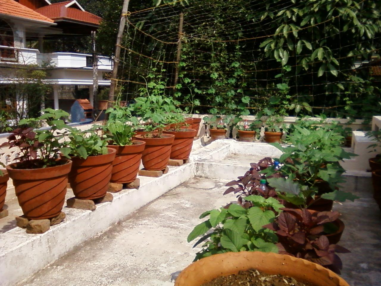 Teen's Kitchen Garden Terrace kitchen garden I