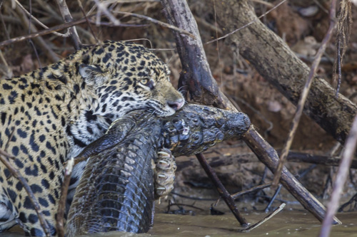 ... Tour To The Pantanal With My Husband Gary Clark In July 2016. The Trip  Is Coordinated By Strabo Tours. Let Me Know If Youu0027d Like Information About  ...
