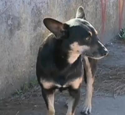 cachorro fica sem comer pela morte do dono