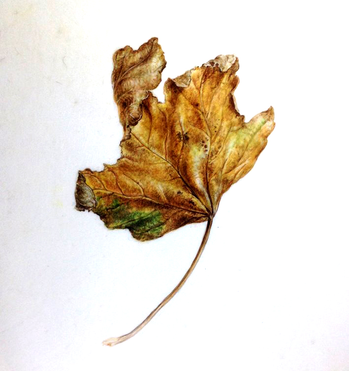 Autumn leaf painting, watercolour on vellum