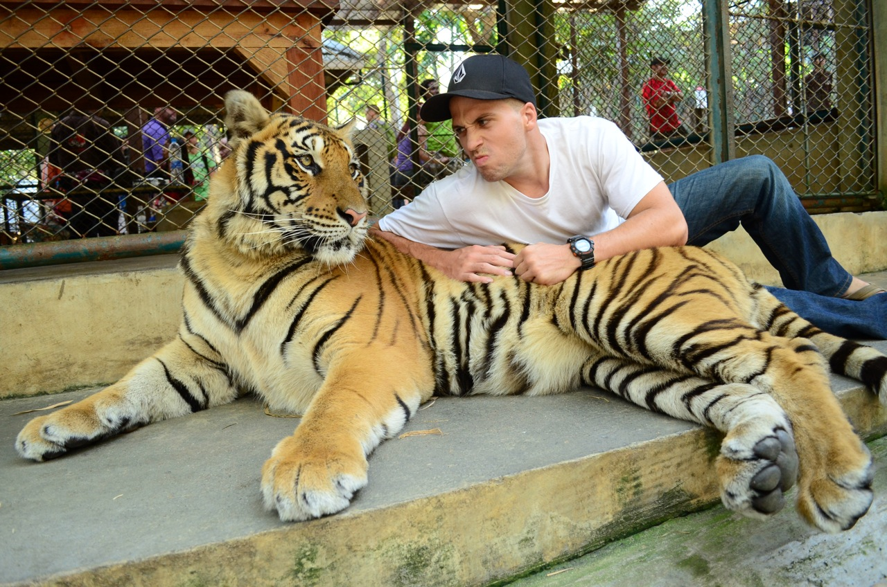 Blakes World: Christmas at the Tiger Kingdom in Chiang Mai