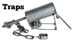 Check out our economical traps!