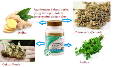 bahan-bahan peppermint-ginger plus