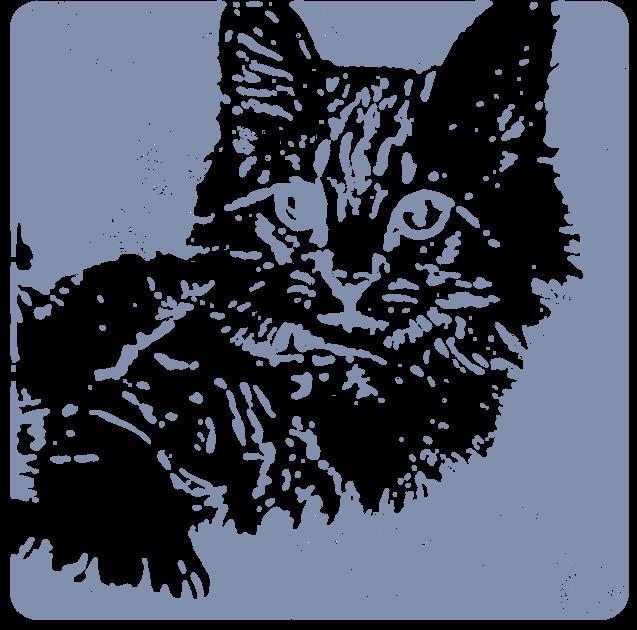 白猫(動物)