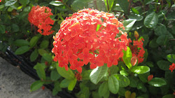 Plant in Bahamas