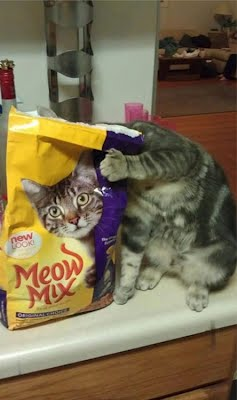 Funny Cat Food Optical Illusion