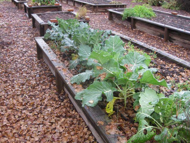 2014 Vegetable Planting Calendar