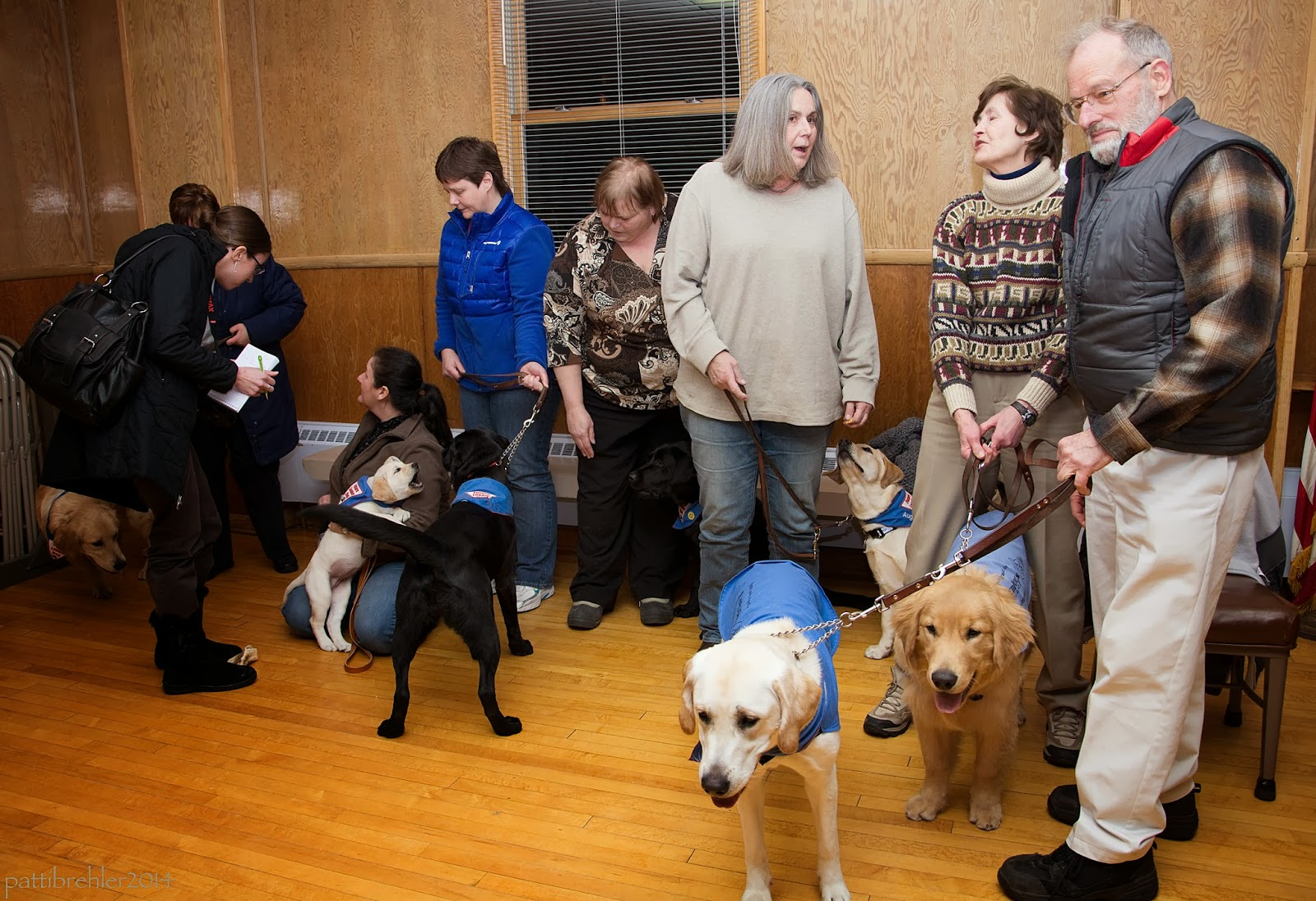 A group of seven people are standing around with Future Leader Dog puppies. The woman on the far left, wearing all black and carrying a huge black purse, is interviewing a woman who is kneeling on the floor with her yellow lab puppy. Two of the other puppies are black labs, two are golden retrievers and two are yellow labs.