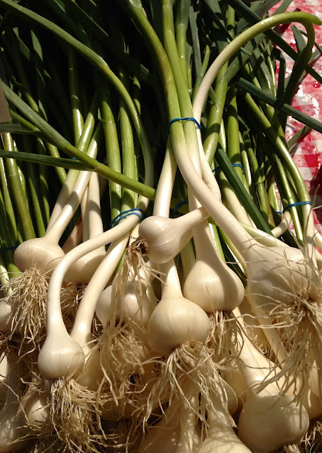 green_garlic_farmers_market