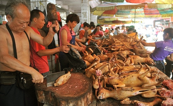 Gossip Lanka, Hiru Gossip, Lanka C News - Chinese dog meat festival faces internal pressure