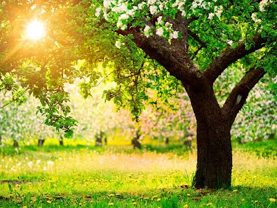 Sol brillante dando luz a los arboles frutales