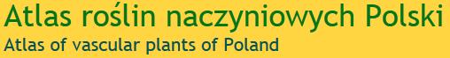 http://www.atlas-roslin.pl/index.html