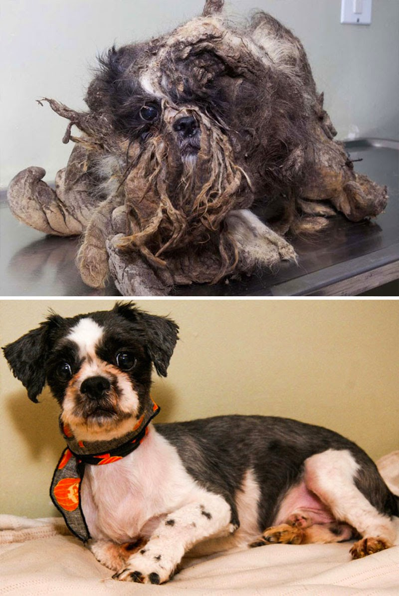 Rasta - 16 Before-and-After Photos Of Rescued Dogs