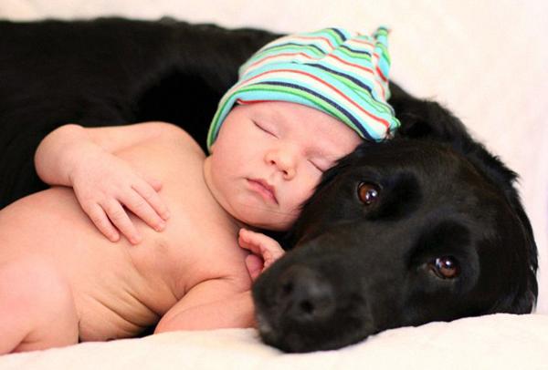 Chú cún canh làm gối tự cho bé ngủ