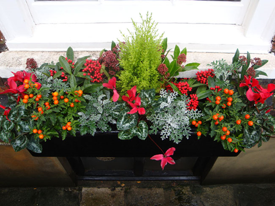 Calling It Home Winter Window Boxes