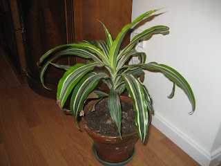 El huerto de balsas plantas de interior y exterior en macetas - Plantas de interior cintas ...