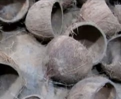 bisnis batok kelapa