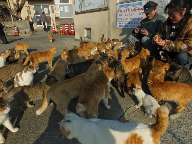 Aoshima, The Cat Island, is a small island into Ozu City, Ehime Prefecture, is a small, unpretentious island in the Seto Inland Sea of Japan.