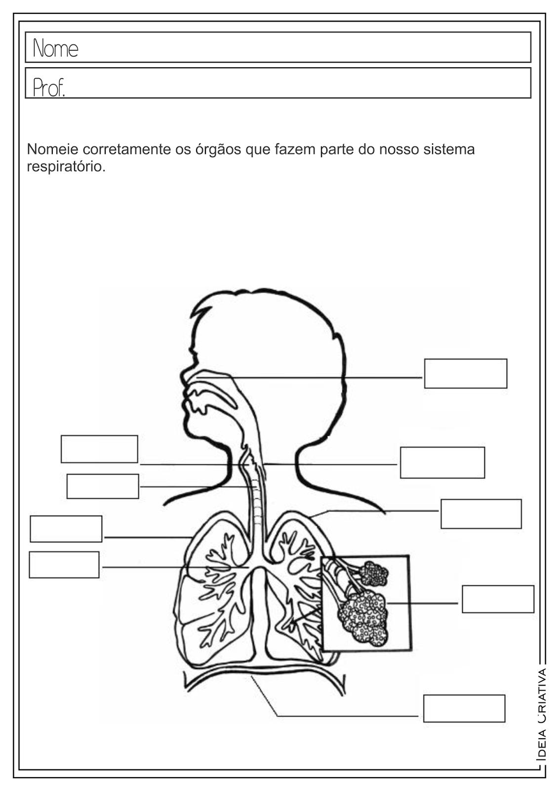 Atividades Educativas Ciências Sistema Respiratório para Ensino Fundamental
