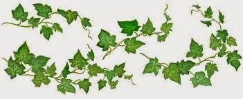 Twisty ivy watercolour picture