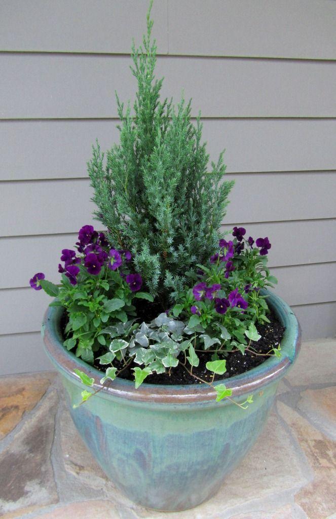 flores jardim perenes : flores jardim perenes:Um jardim para cuidar: Floreiras floridas para o inverno