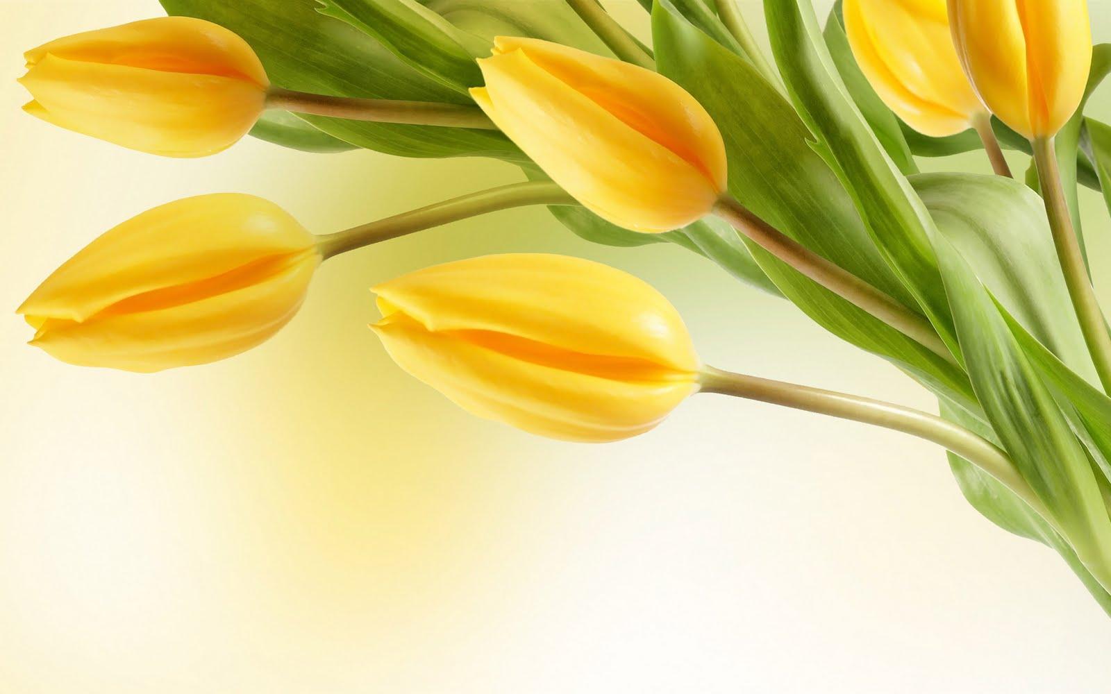 http://4.bp.blogspot.com/-yipQ3eWWaaI/Ti023z6MY0I/AAAAAAAADK8/ASzrdH3mNM0/s1600/Tulip+flowers+wallpaper-3.jpg