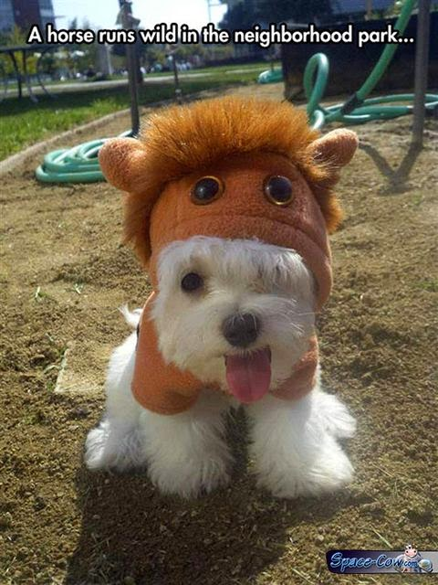 funny animals dog costume