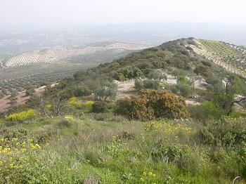 Torre y montecillo de Albendín