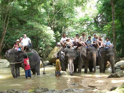 ทัวร์ขี่ช้าง ที่เกาะสมุย