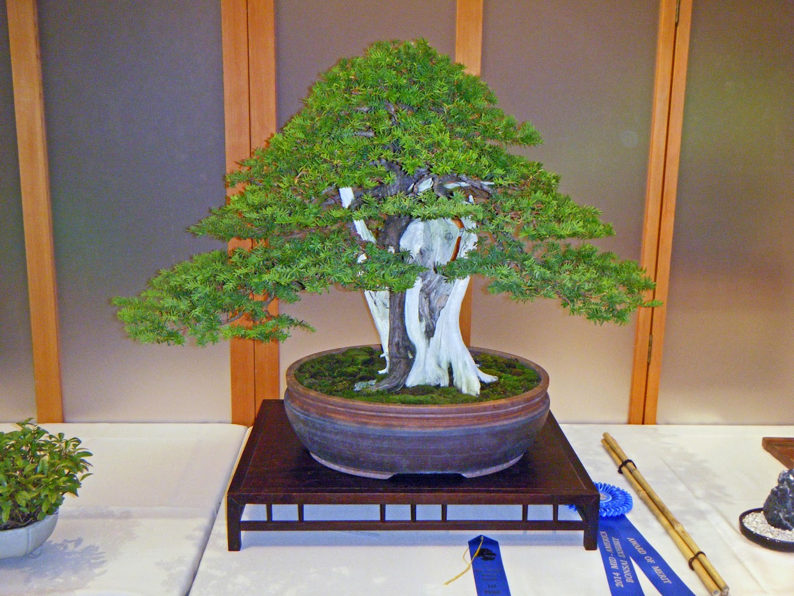 Bonsai In Hoosierland Mid America Bonsai Show 2014 Part 3 The