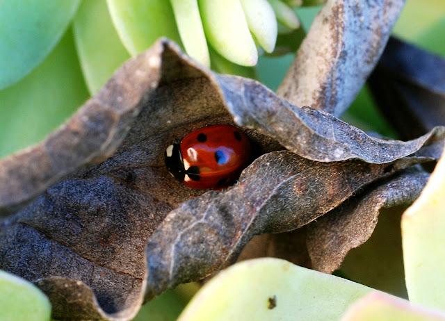 Il mondo in un giardino il riposo della coccinella - Lotta alle talpe in giardino ...