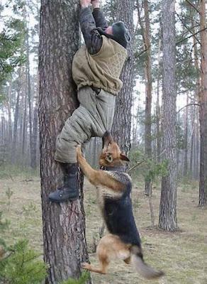 Digigit Anjing