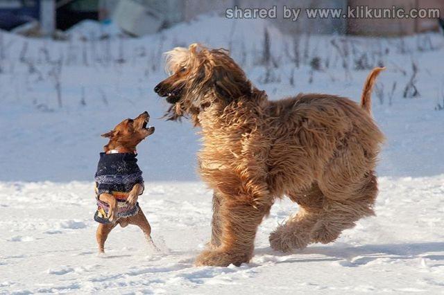 http://4.bp.blogspot.com/-yjkeGCzCFhE/TXWBHFr04GI/AAAAAAAAQLE/dlOObhhqOkg/s1600/these_funny_animals_632_640_10.jpg