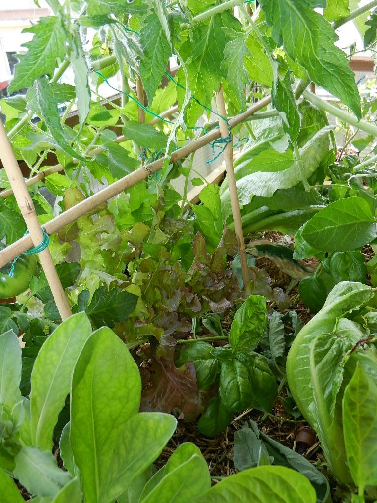 La filosofia de nuestra mesa de cultivo el balcon verde - Mesa de cultivo ...