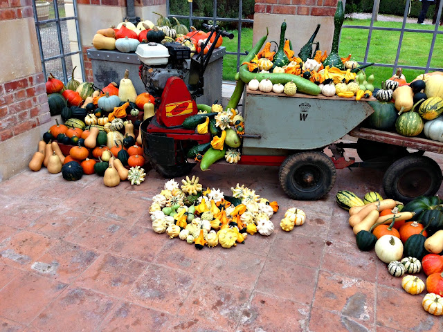 Pumpkins and gourds galore in the Orangery at Tyntesfield