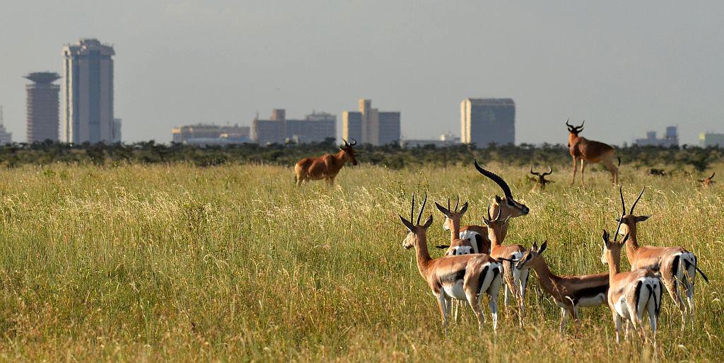 Nairobi Kenya  City new picture : Nairobi Kenya