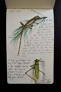 grasshopper and lizard
