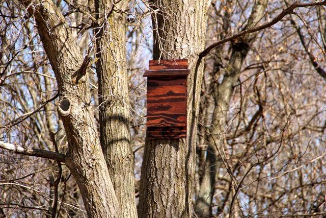 newly installed bat house (front view)