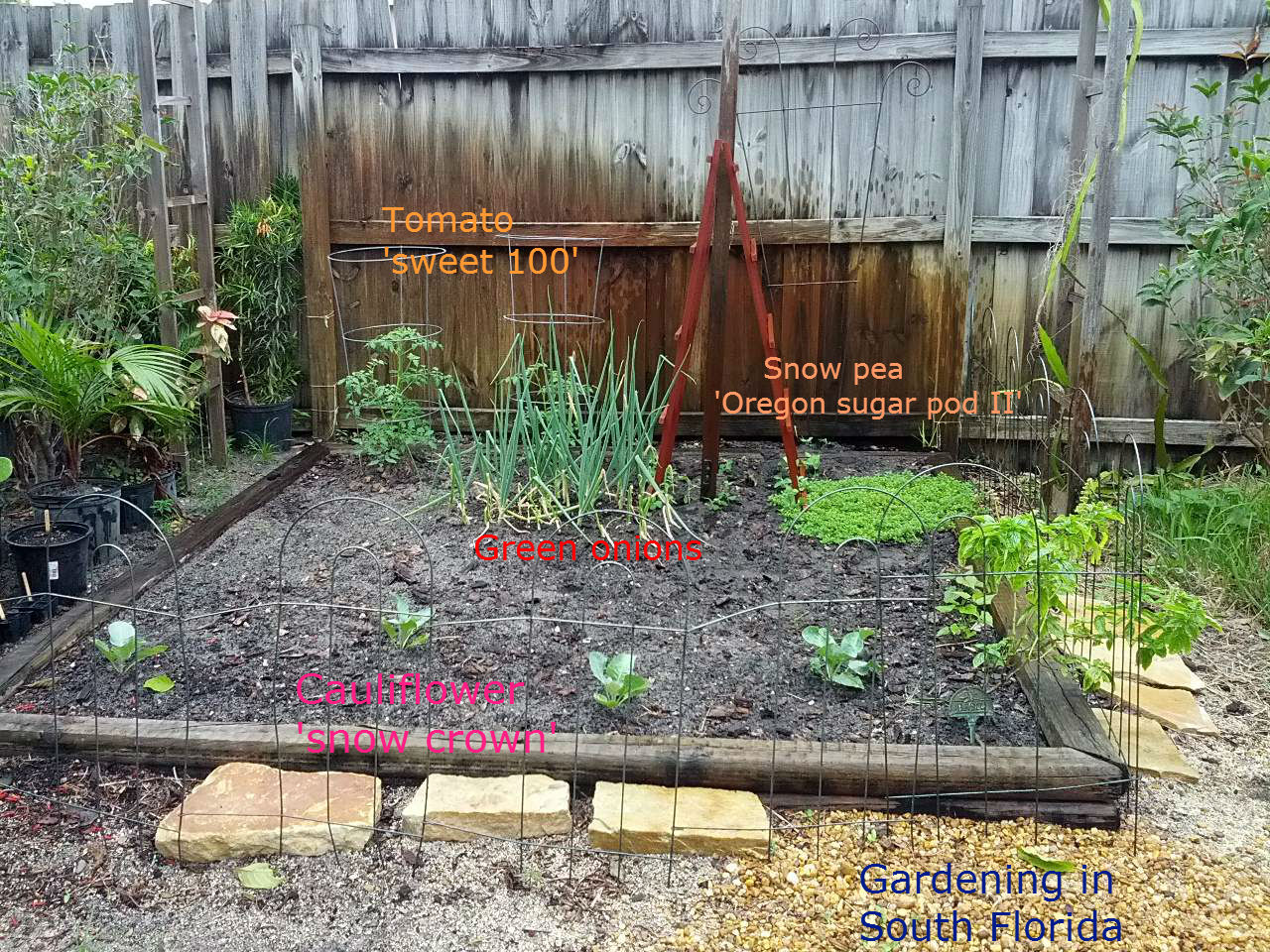 Gardening south florida style our 2013 vegetable garden - South florida vegetable gardening ...