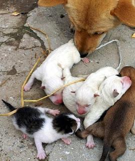 Anjing Melahirkan Kucing Di Korea Selatan
