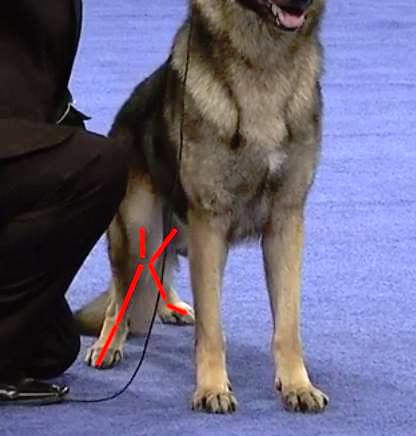 Pedigree Dogs Exposed - The Blog: GSD winner \