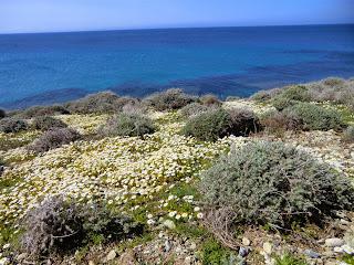 Spring flowers in Cap Corse