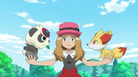 Pokemon XY - Capitulo 50 - ¡¡El baile del mañana!!