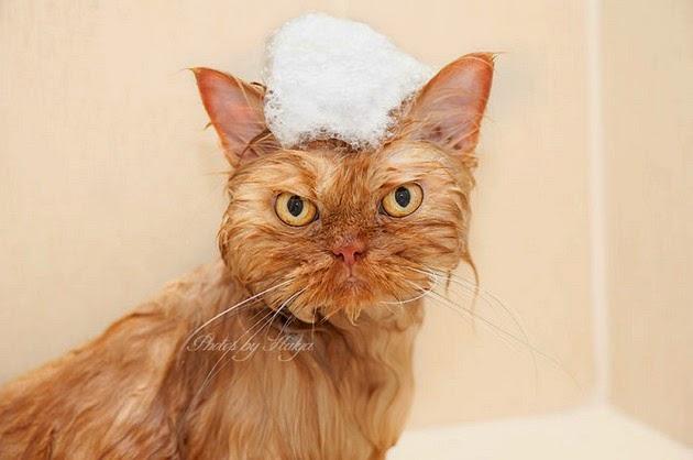 adorable-cat-4