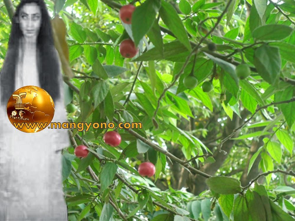 Neng Kunti sedang Axis di pohon kersen. Foto hasil sotosop.. Hehehe