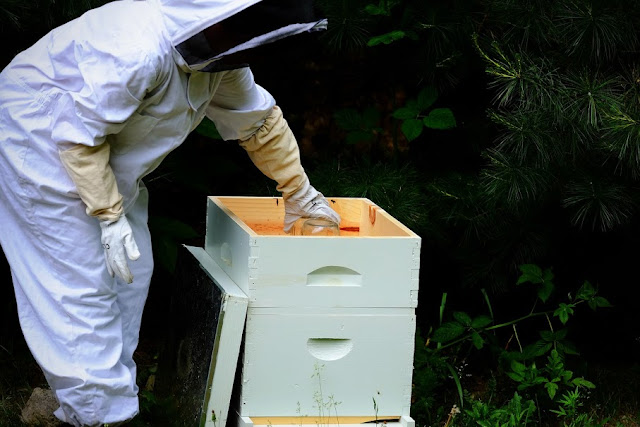 changing the syrup on a bee hive